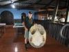 Giant Tortoise shell