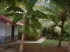 bodega-treehouse